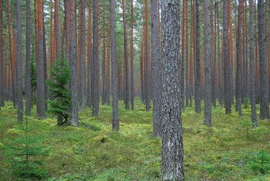 Parduodamas miškas